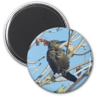 Bird in a Tree Magnets