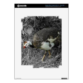 Bird in a Vineyard Decals For iPad 3