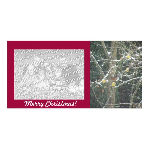 bird in a winter tree photo card template