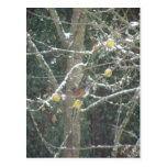 bird in a winter tree post card