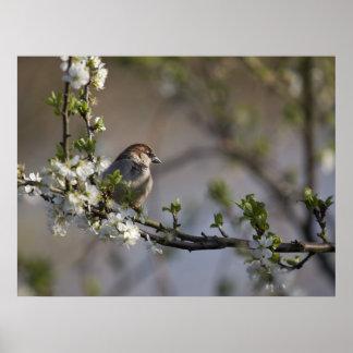 Bird in Blossom Poster