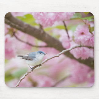 Bird in Blossom Tree Mouse Pad