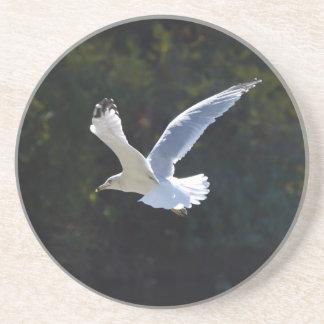 Bird in Flight Coaster