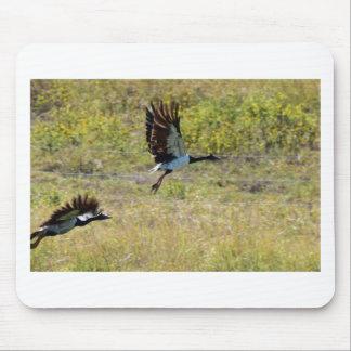 BIRD IN FLIGHT MAGPIE GOOSE AUSTRALIA MOUSE PAD