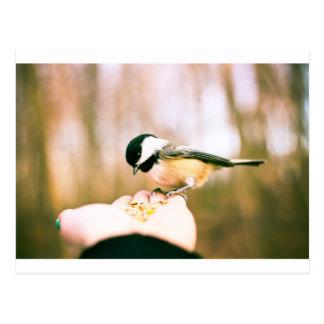 Bird in hand postcard