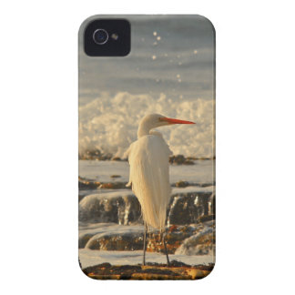 Bird in Paradise iPhone 4 Case-Mate Case