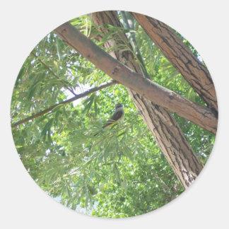 Bird in the Branches Classic Round Sticker