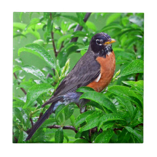 BIRD IN THE RAIN, ROBIN IN A RAINY DAY ON A TREE TILE