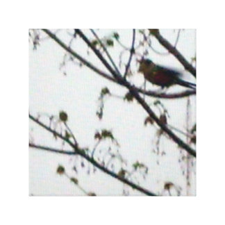 Bird in the Tree Canvas Art Picture
