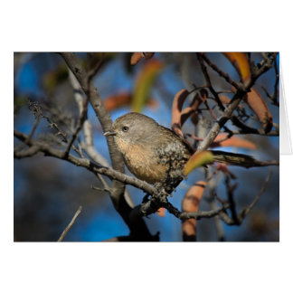 Bird in Tree Greeting Cards