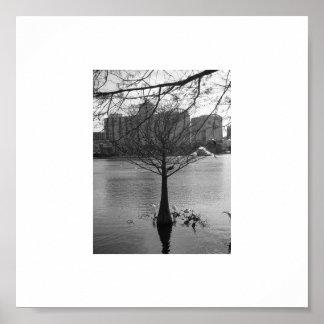 Bird in tree poster