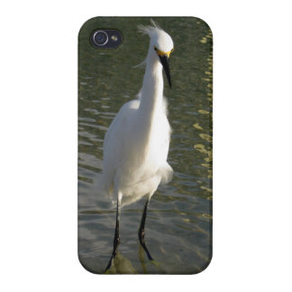 Bird in Water Case For iPhone 4