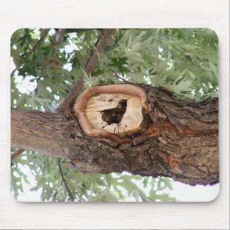 Bird in Wood Mouse Pad
