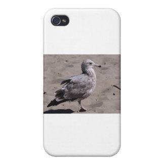 bird iPhone 4/4S cover