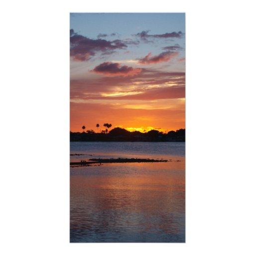 Bird island photo card