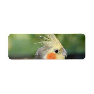 Bird Return Address Label