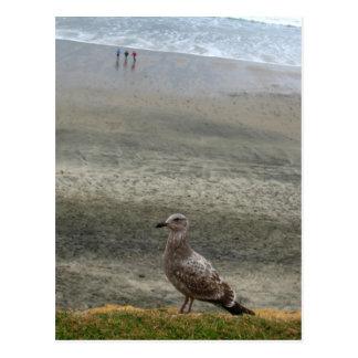 Bird Layers Postcard