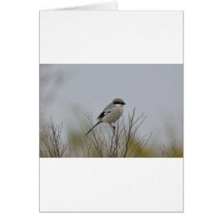 Bird Loggerhead Shrike Nest Nature Greeting Card