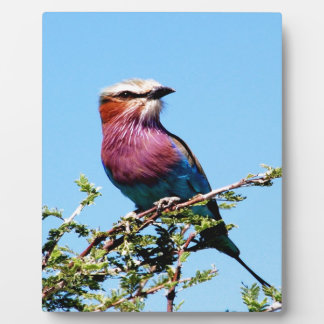 Bird Look forward to love peace joy Plaque