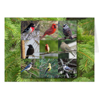 Bird Lover Card