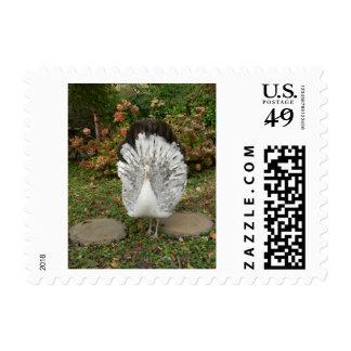 Bird Lover's Stamp