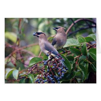 Bird Lunch Greeting Card (Blank Inside)