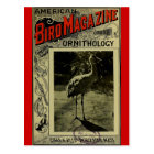 Bird Magazine jul 3 1903 Postcard