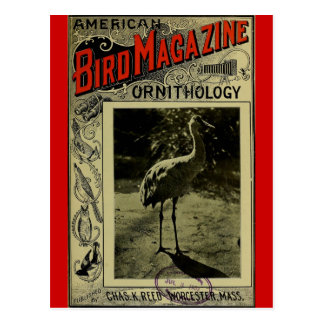 Bird Magazine jul 3 1903 Postcard