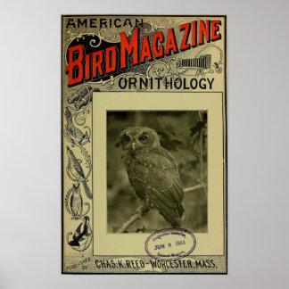 Bird Magazine jun 8 1903 Poster