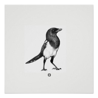 Bird - Magpie - Elster poster, square div. Sizes Poster