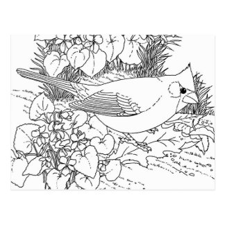 bird nature adult coloring postcard gift