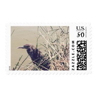 bird near lake postage