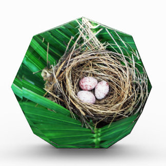 Bird Nest Acrylic Award