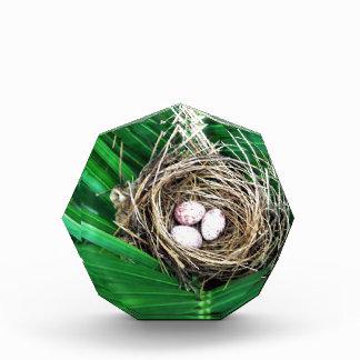 Bird Nest Award