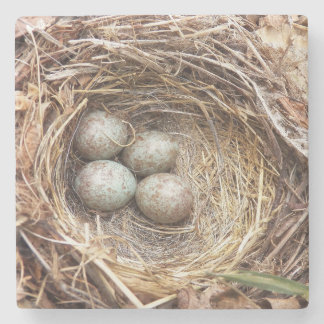 Bird Nest Eggs Photo Stone Coaster