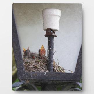 Bird nest in a street lamp. plaque