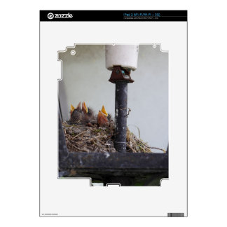Bird nest in a street lamp. skins for iPad 2