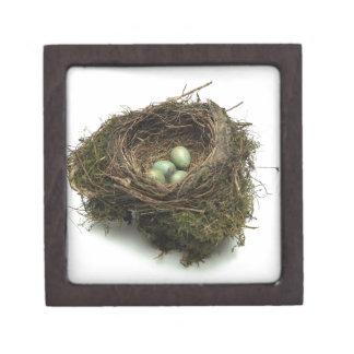 Bird Nest Jewelry Box