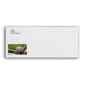 Bird Nest Light Envelope