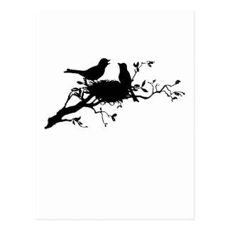 Bird Nest Postcard
