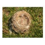 Bird Nest Postcard!