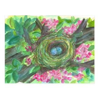 Bird Nest Robin Eggs Pink Flower Tree Post Card