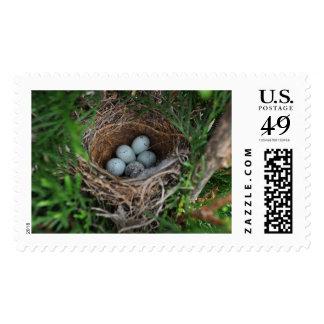Bird Nest Stamp