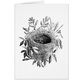 bird nest vintage illustration card
