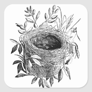 bird nest vintage illustration square sticker