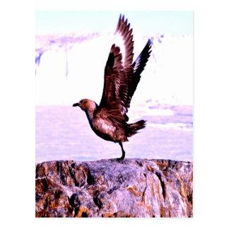 bird Nice Take off Postcard