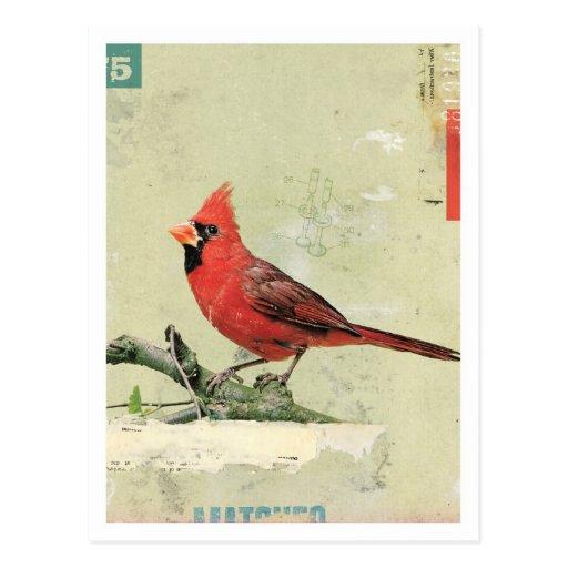 Bird No.6 Postcard