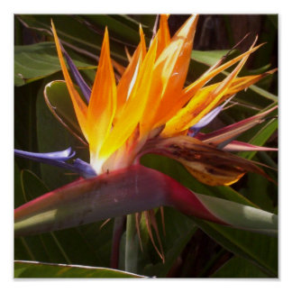 bird of paradise 1 posters