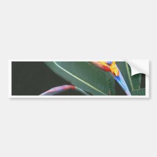 Bird of Paradise 2 Bumper Sticker