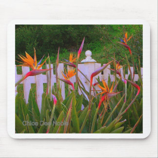 Bird of Paradise 3 Mouse Pad